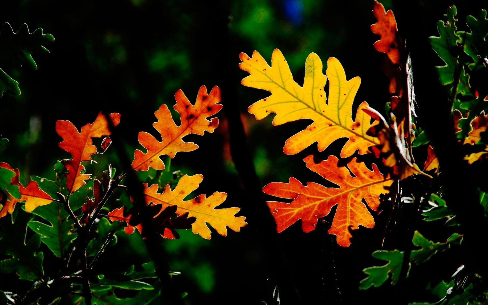 Осенние листья картинки на рабочий стол008