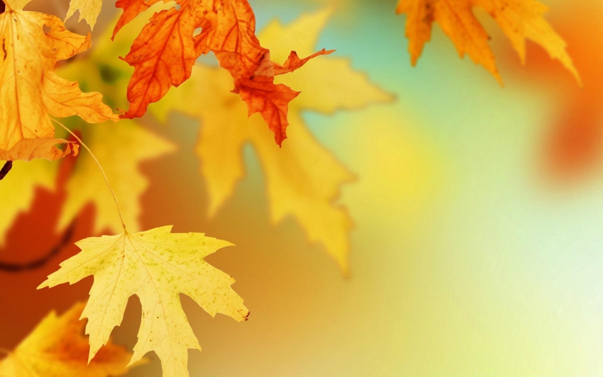Осенние листья картинки на рабочий стол010