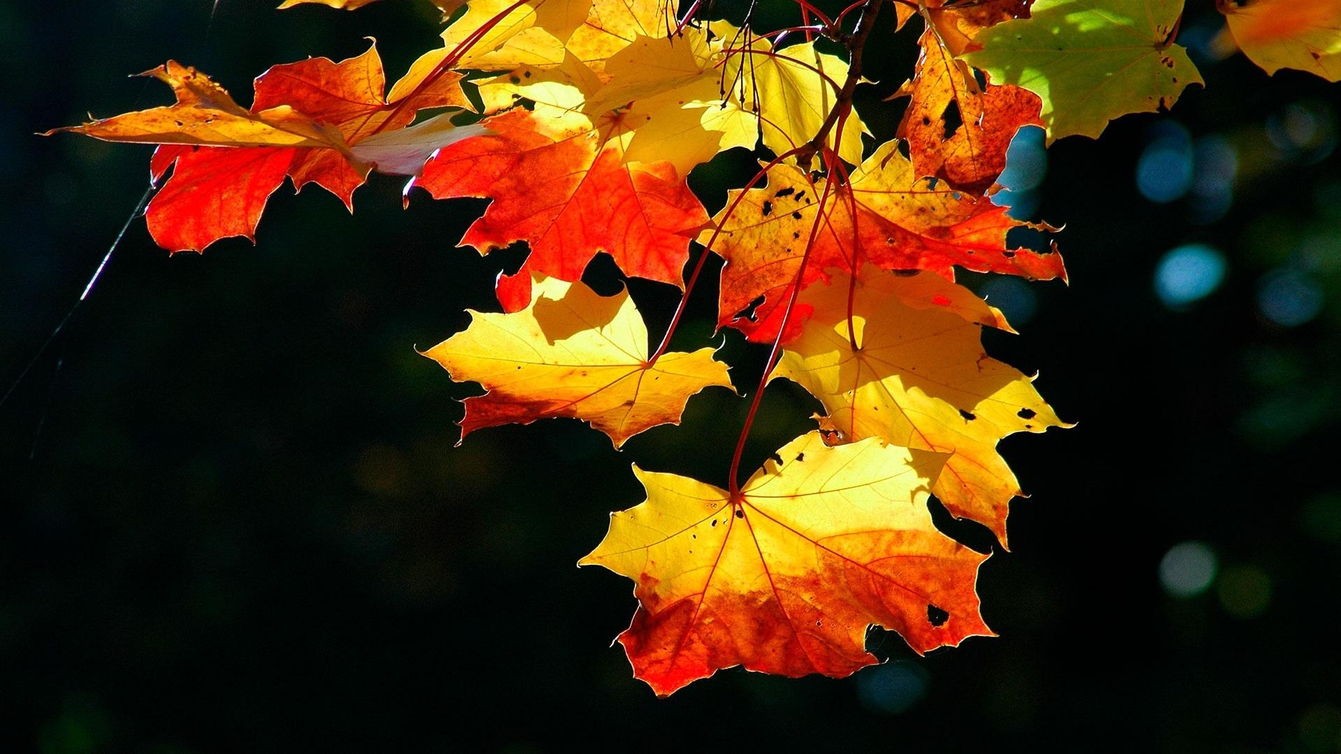 Осенние листья картинки на рабочий стол011