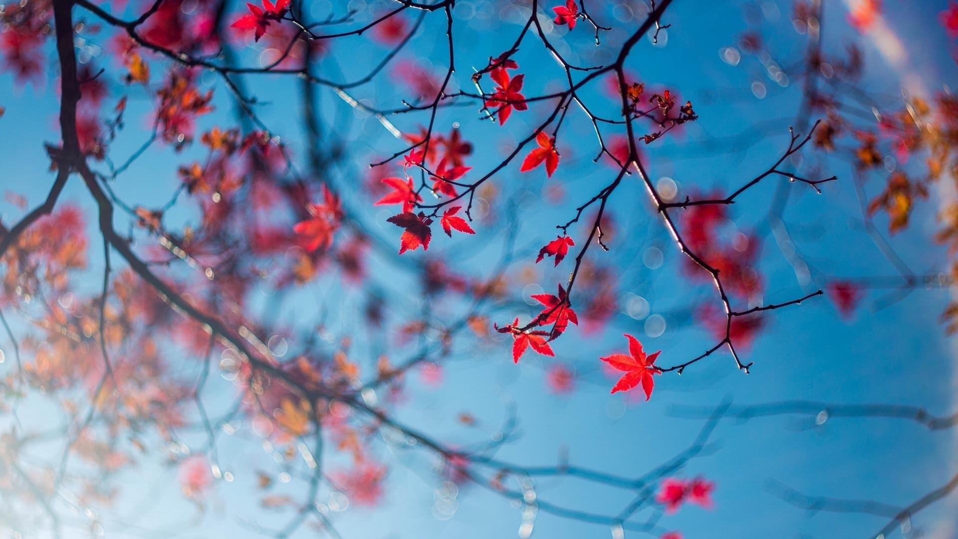 Осенние листья картинки на рабочий стол013