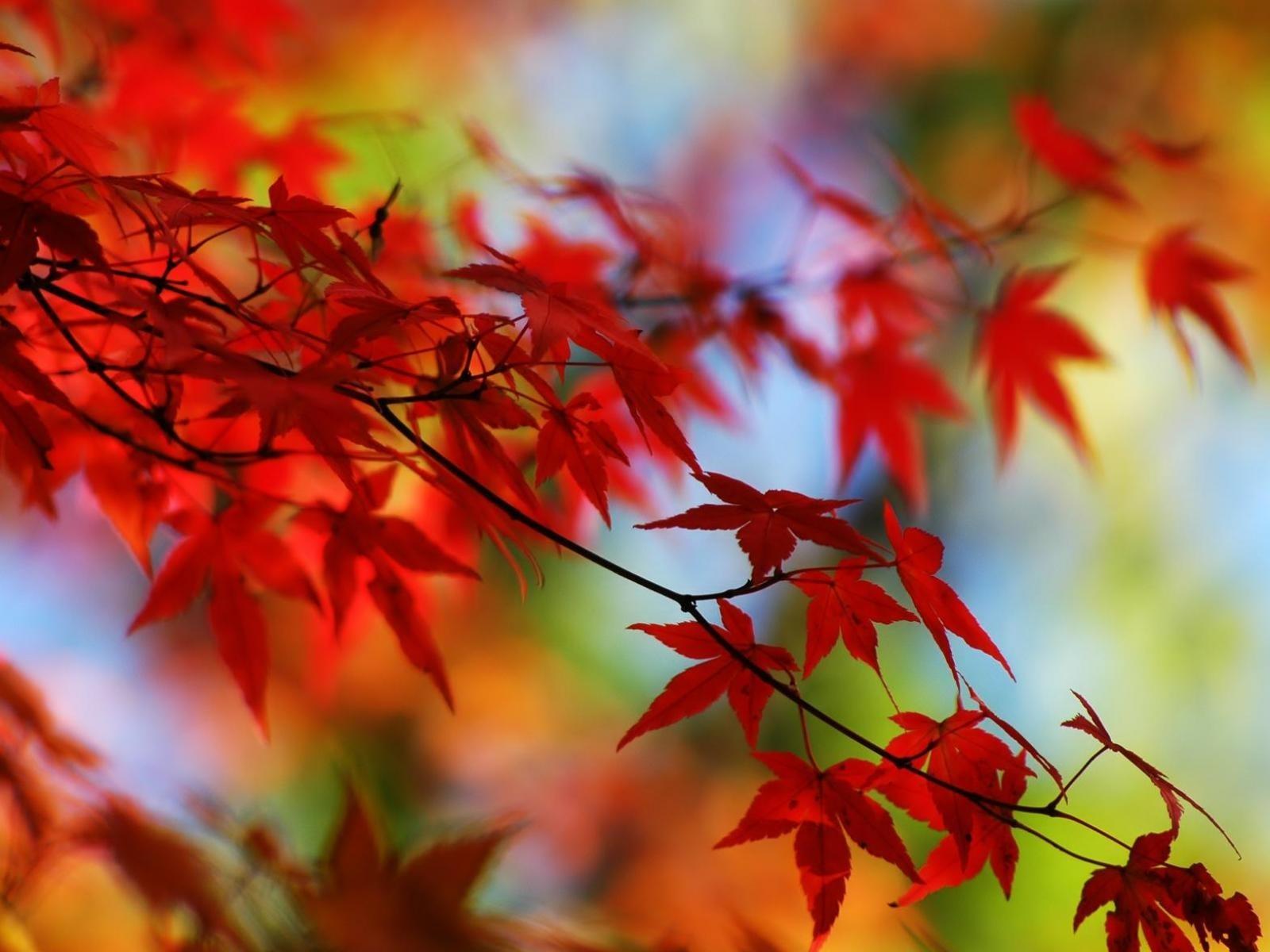 Осенние листья картинки на рабочий стол014