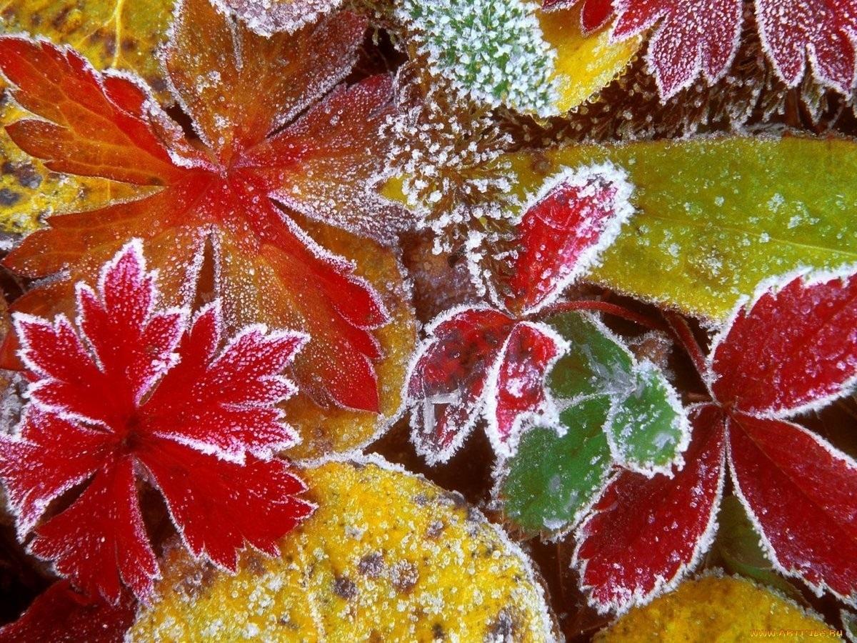 Осенние листья картинки на рабочий стол016