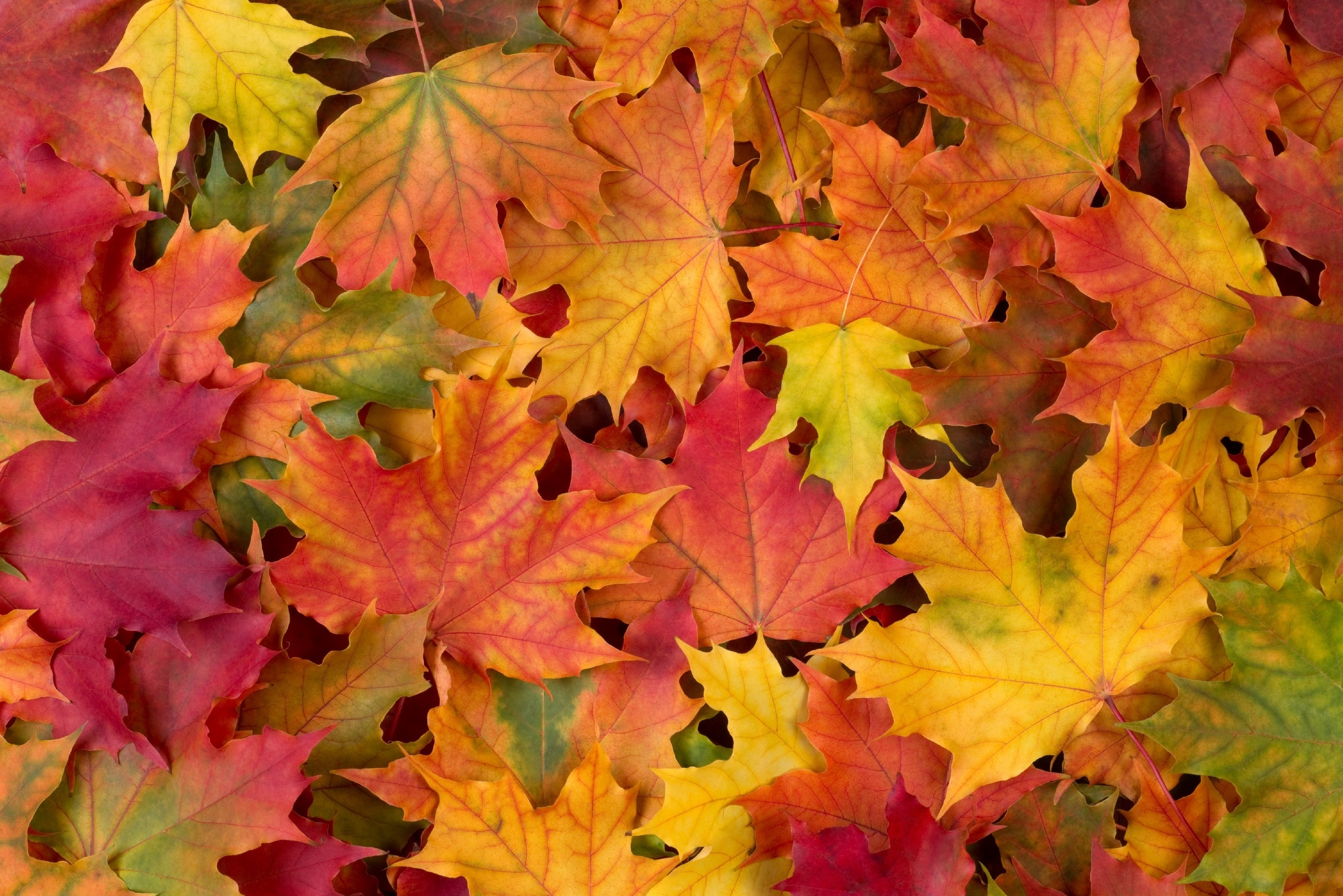 Осенние листья картинки на рабочий стол017