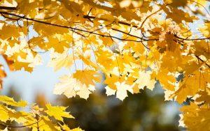 Осенние листья картинки на рабочий стол018