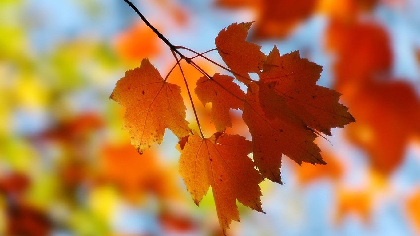 Осенние листья картинки на рабочий стол019