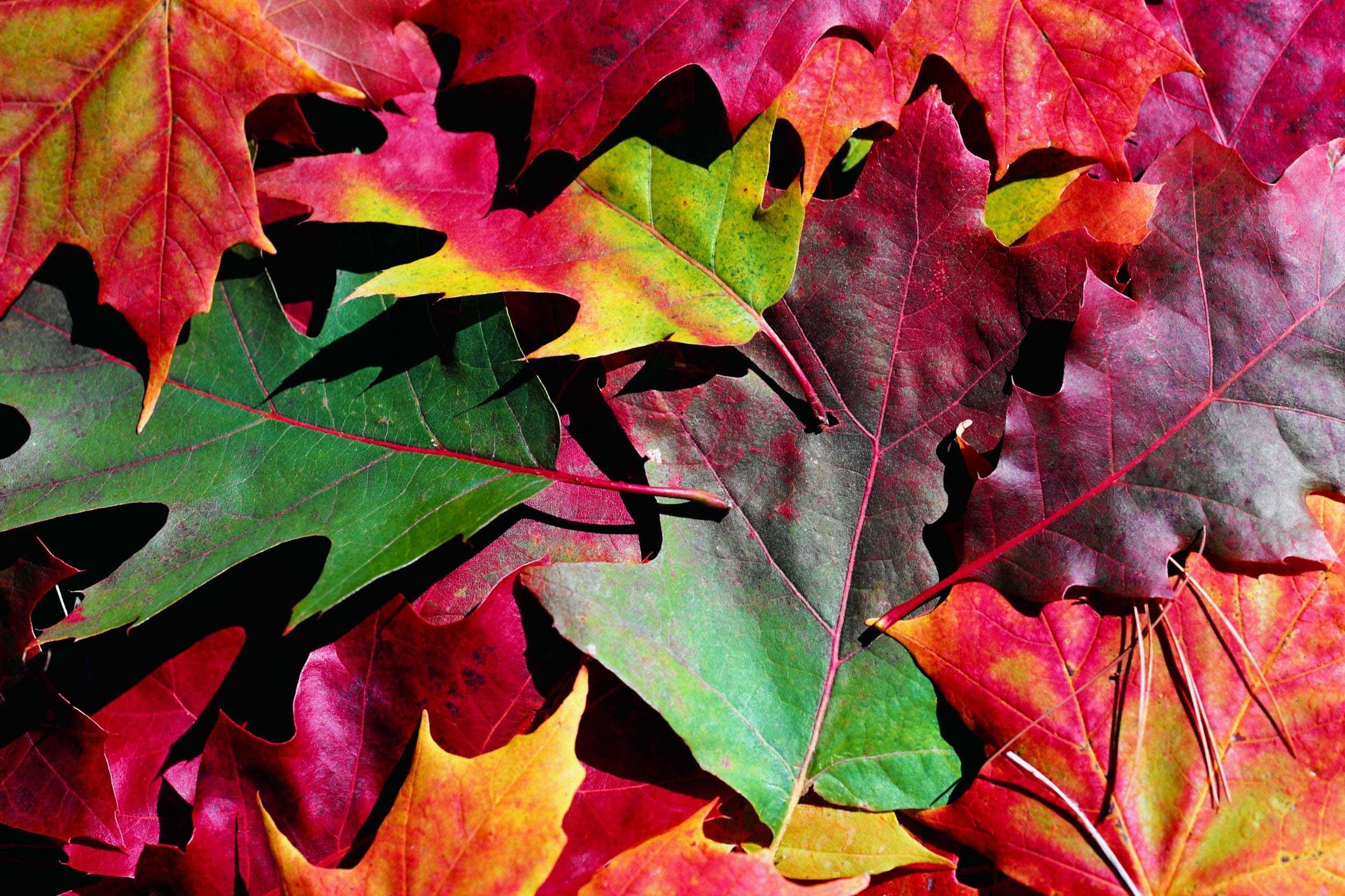 Осенние листья картинки на рабочий стол020