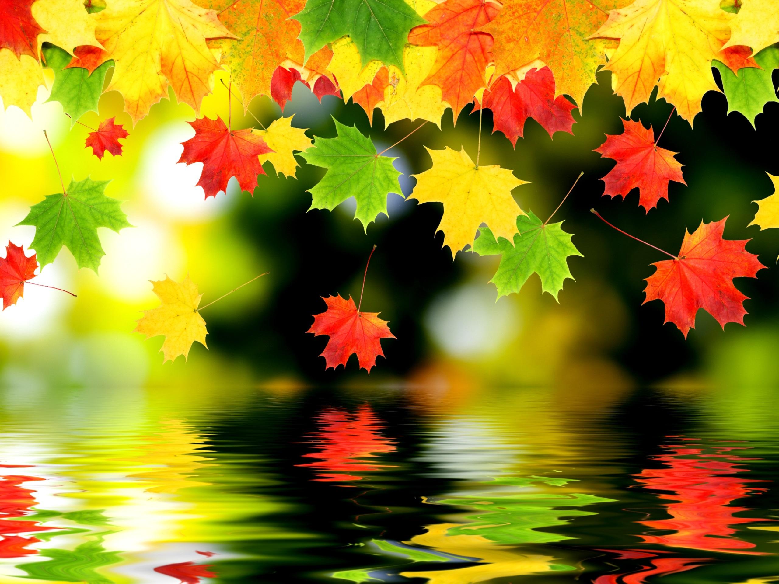 Осенние листья картинки на рабочий стол021