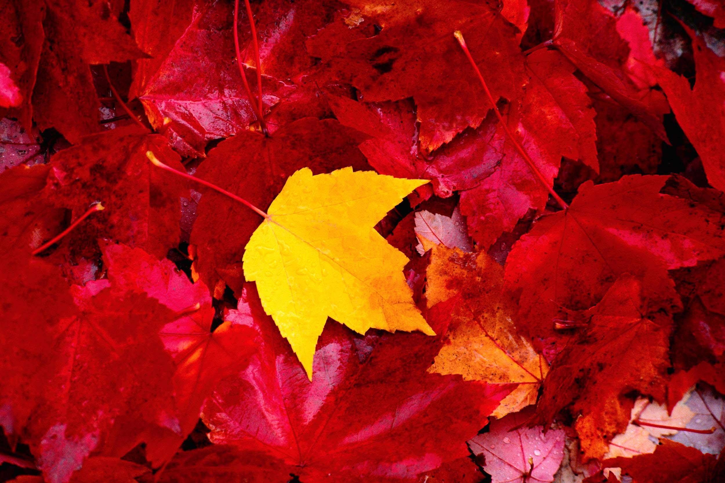 Осенние листья картинки на рабочий стол022
