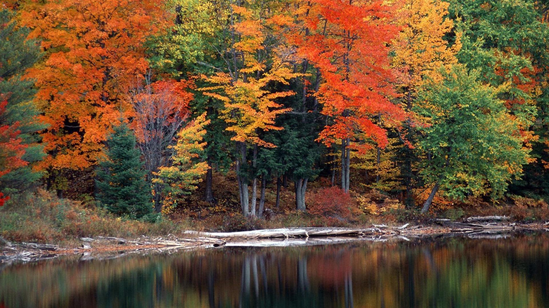 Осенний лес фото на рабочий стол002