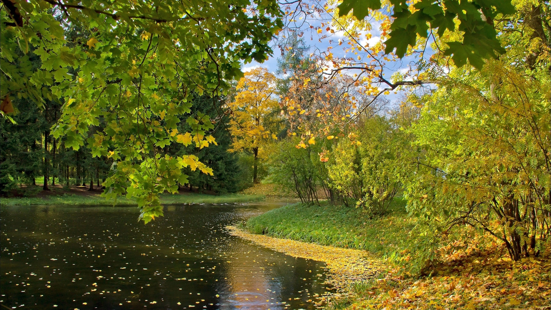 Осенний лес фото на рабочий стол006