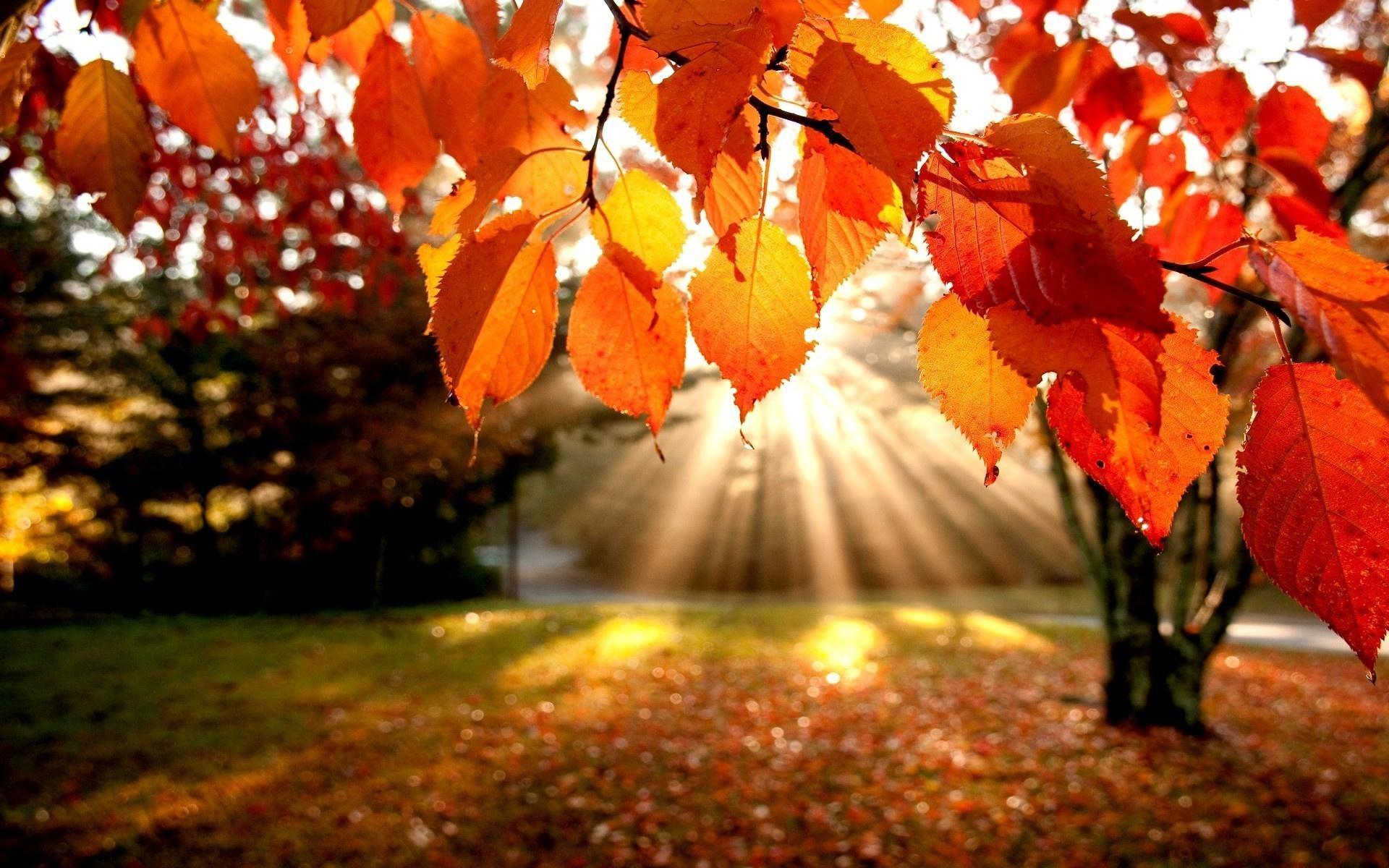 Осенний лес фото на рабочий стол008