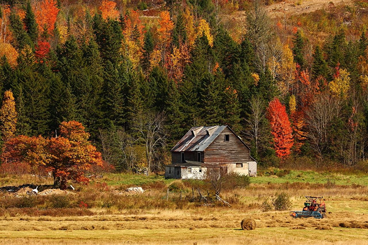 Осенний лес фото на рабочий стол009