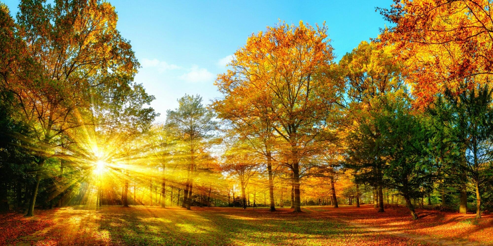 Осенний лес фото на рабочий стол013