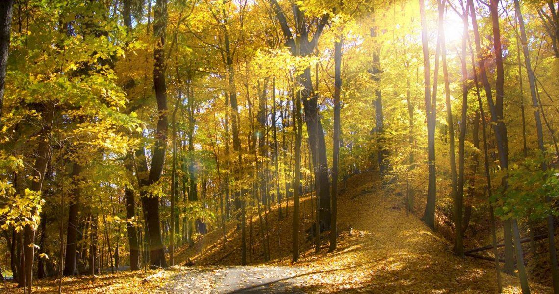 Осенний лес фото на рабочий стол015