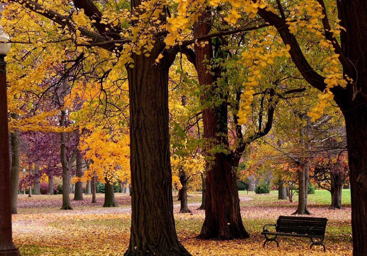 Осенний парк картинки на рабочий стол006