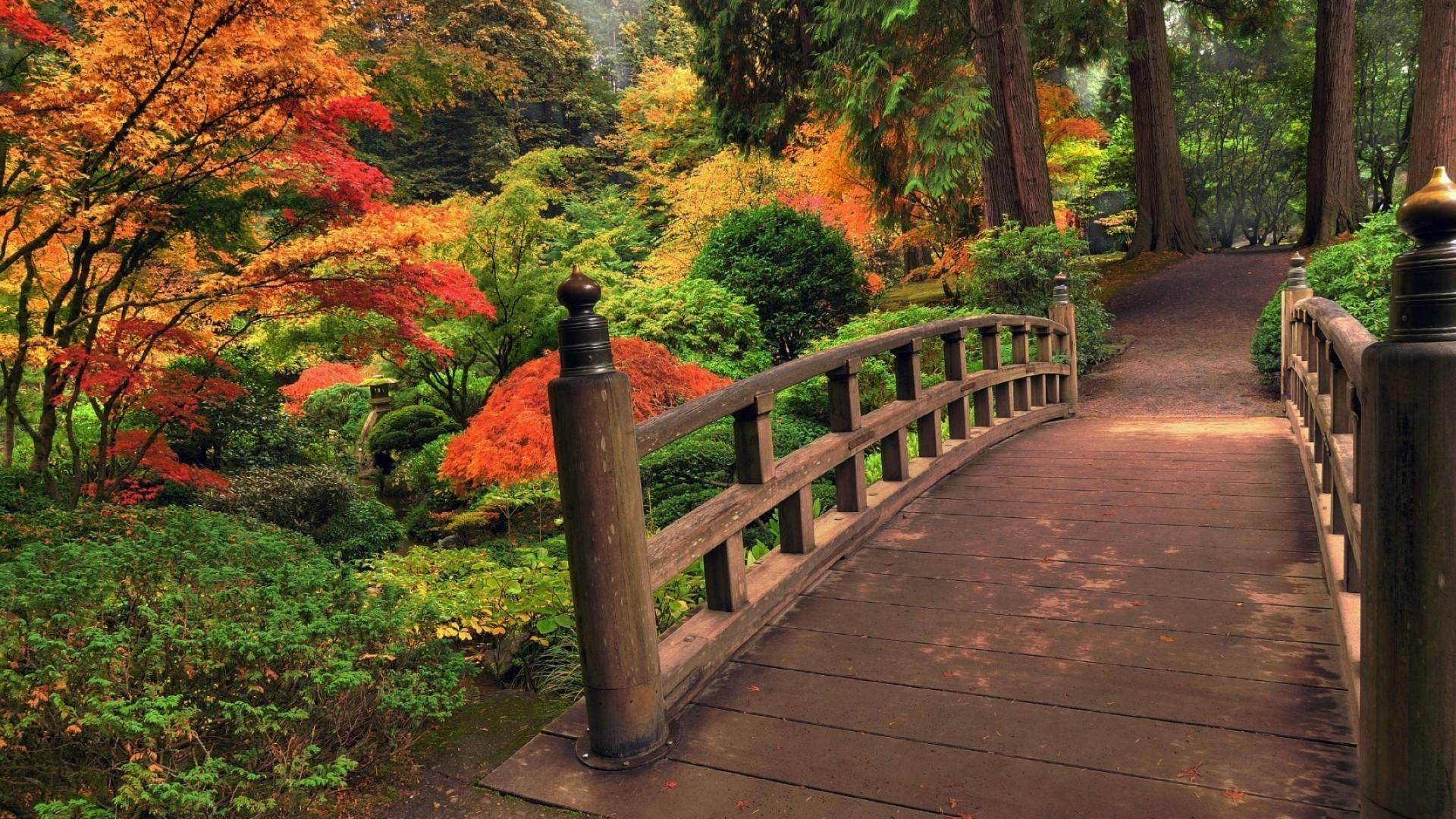 Осенний парк картинки на рабочий стол010