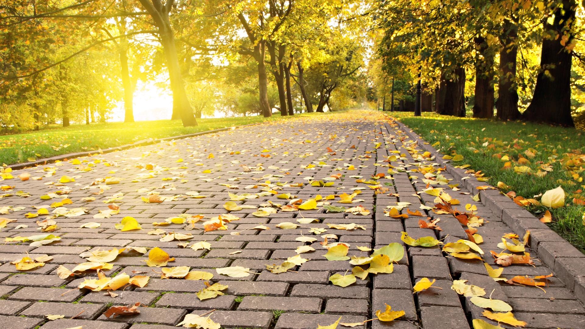 Осенний парк картинки на рабочий стол014