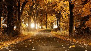 Осенний парк картинки на рабочий стол016