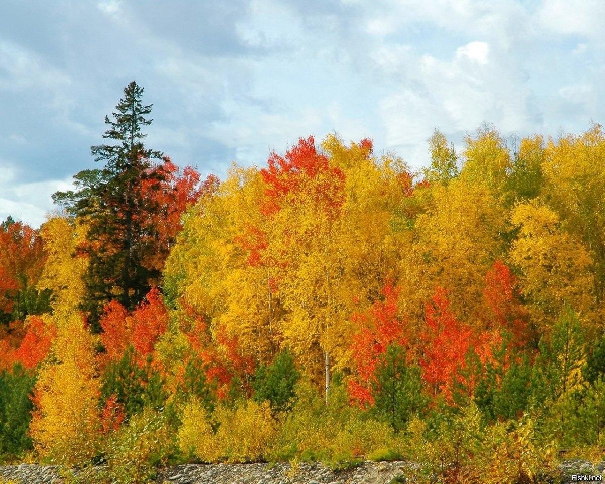 Осень в России картинки008