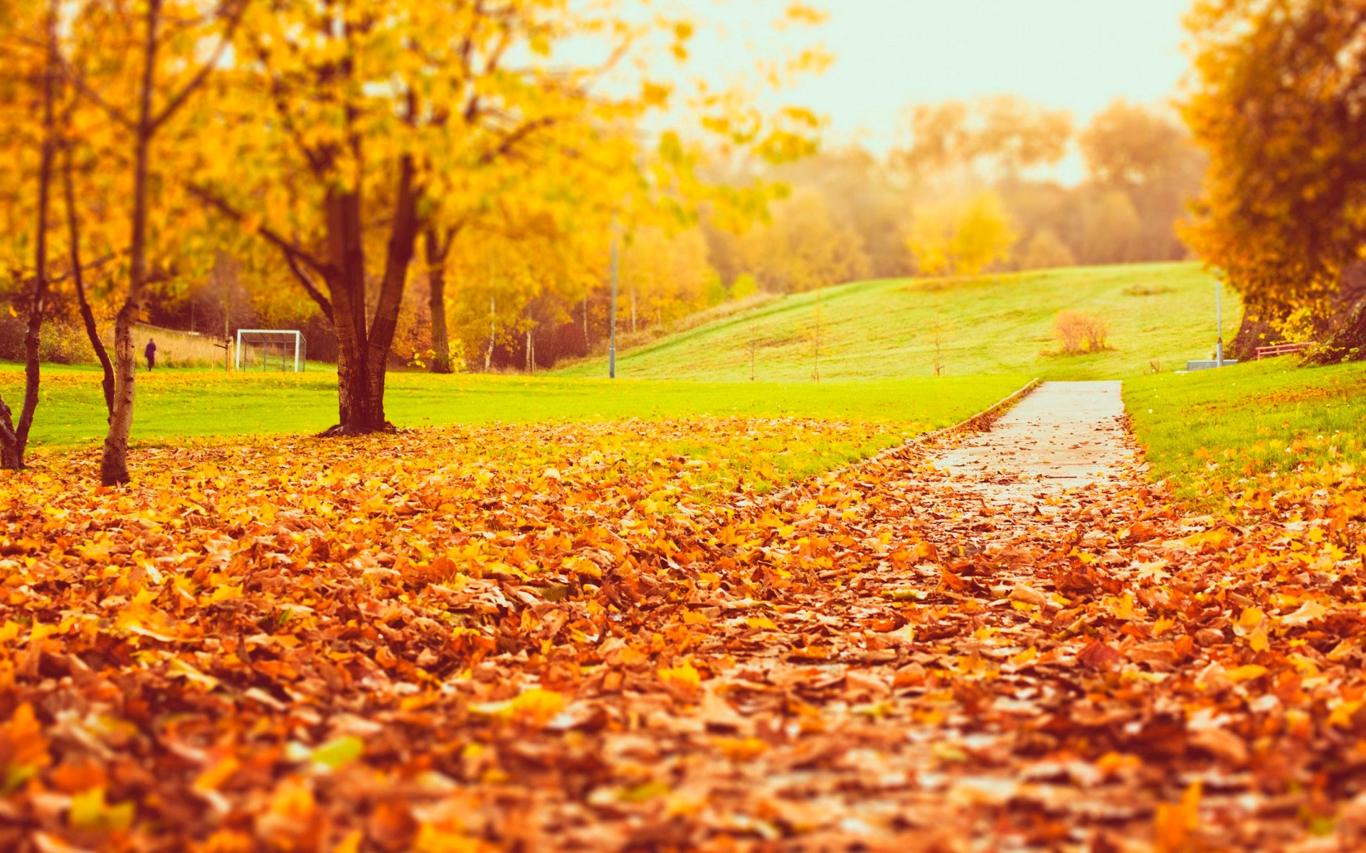 Осень в парке обои для рабочего стола003