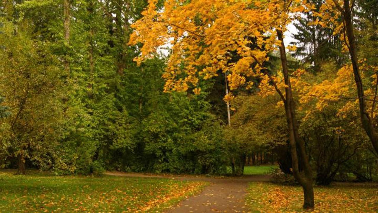 Осень в парке обои для рабочего стола005