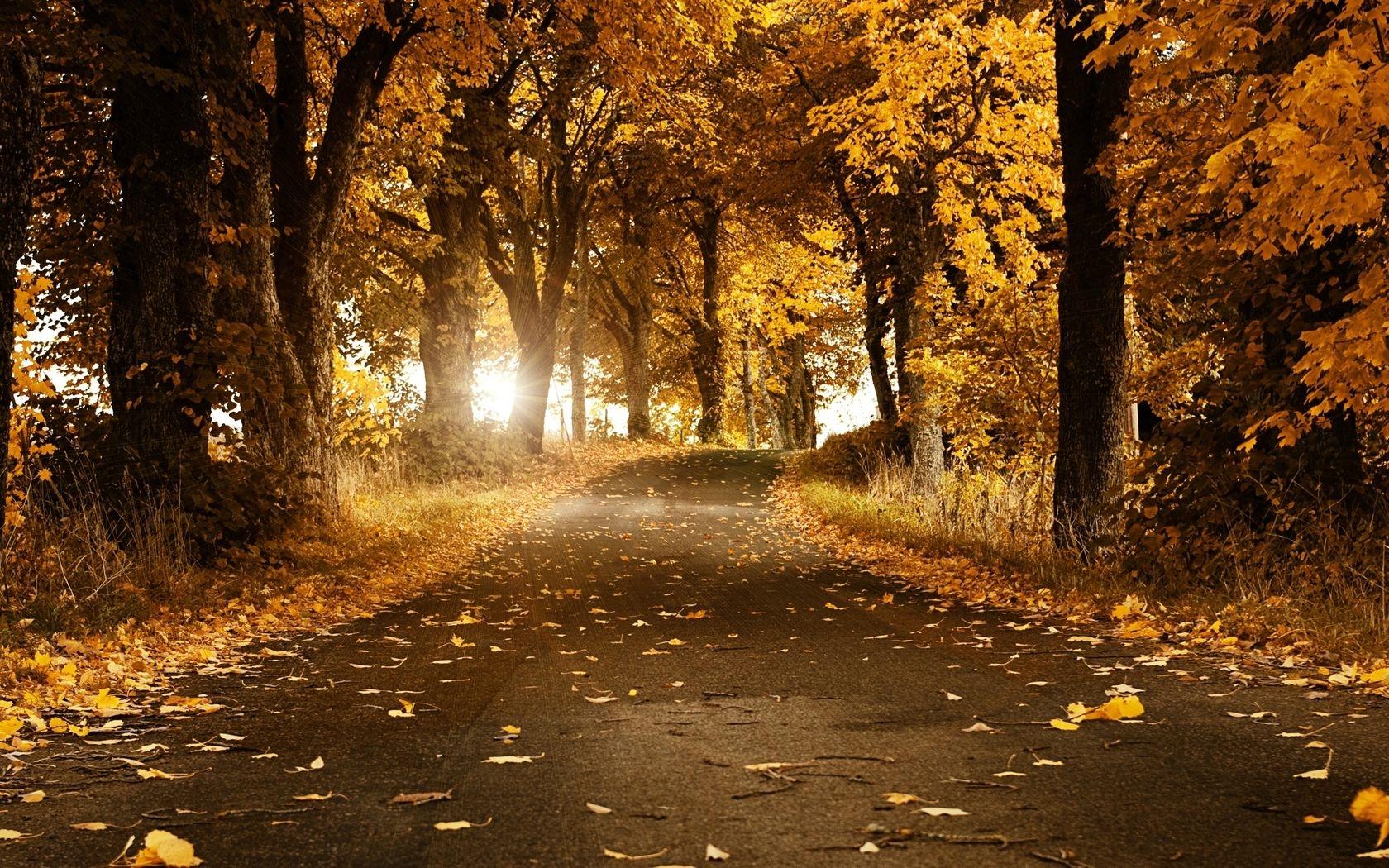 Осень в парке обои для рабочего стола008