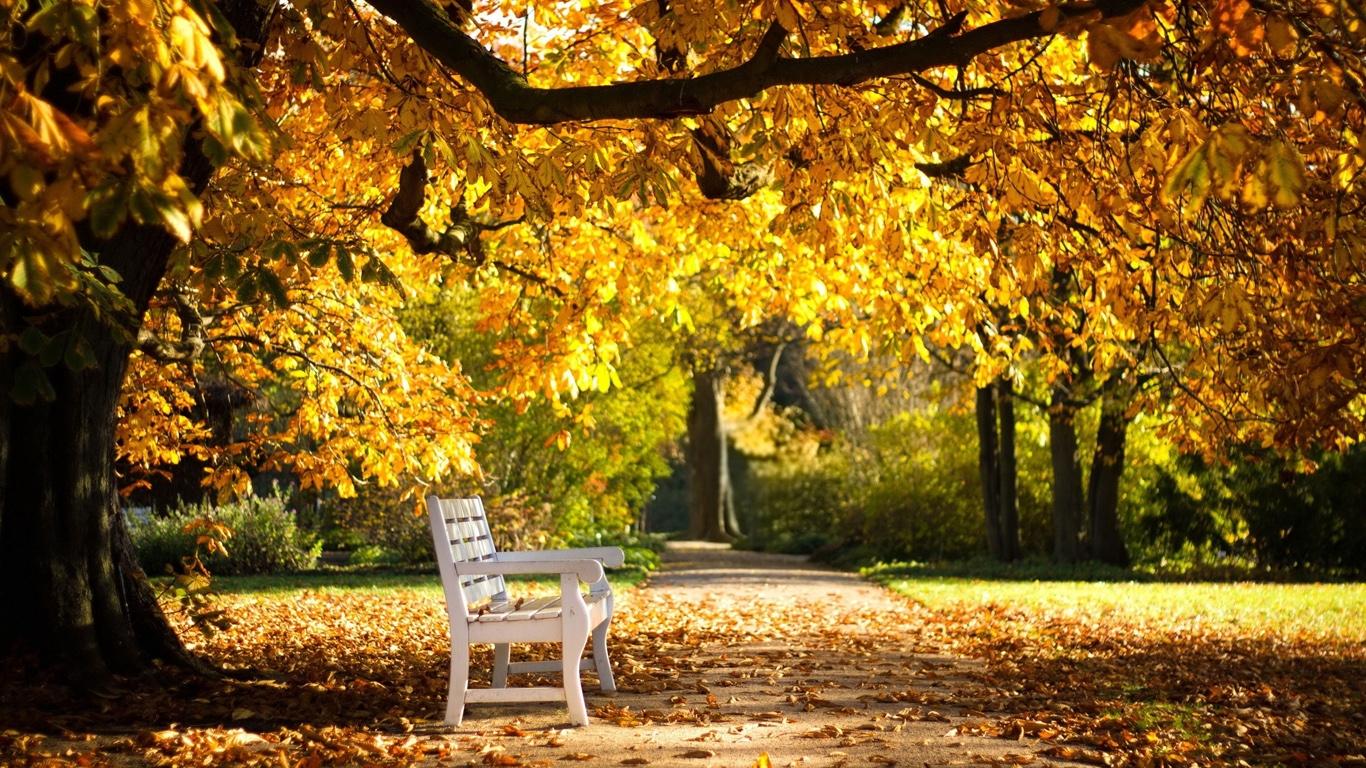 Осень в парке обои для рабочего стола010
