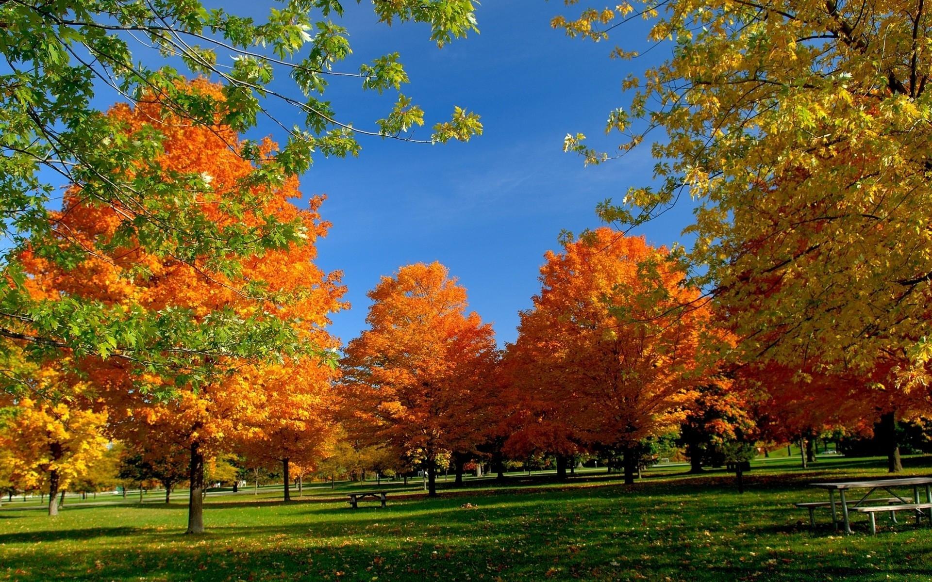 Осень в парке обои для рабочего стола011