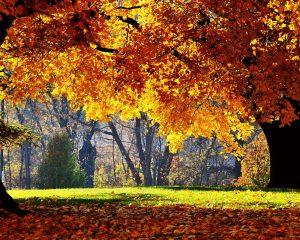 Осень в парке обои для рабочего стола016