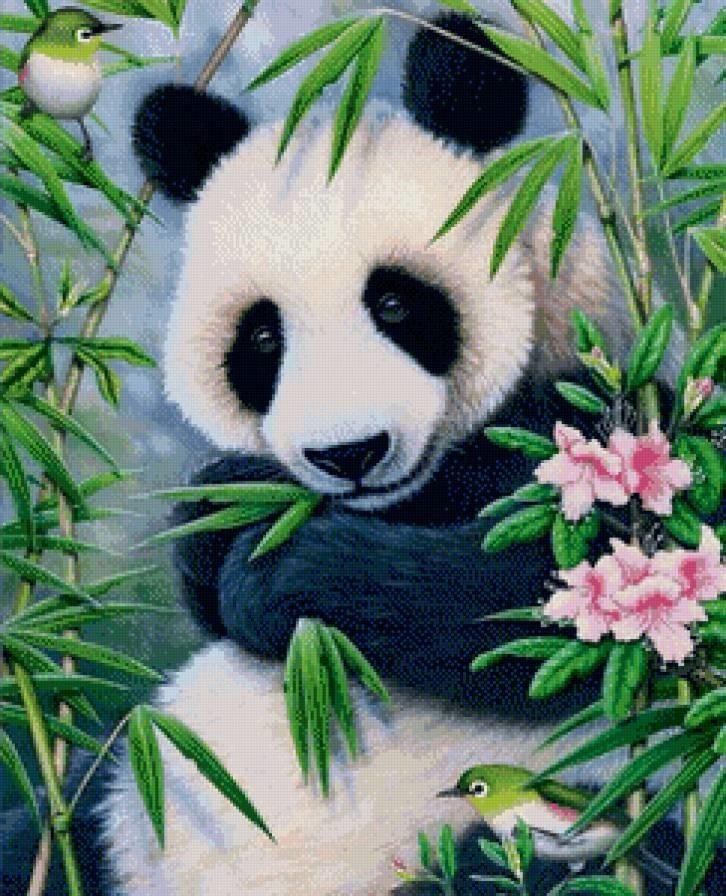 Панда скачать фото005