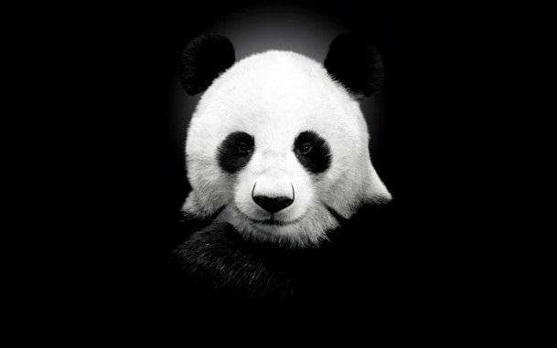 Панда скачать фото007