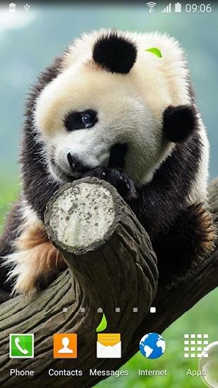Панда скачать фото014