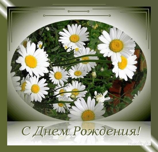 Поздравления с днем рождения с ромашками картинки   очень красивые003