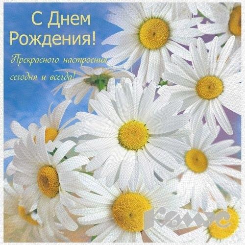 Поздравления с днем рождения с ромашками картинки   очень красивые011