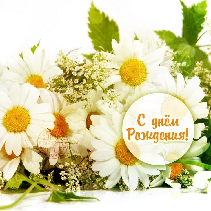 Поздравления с днем рождения с ромашками картинки   очень красивые014