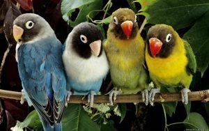 Попугаи обои красивые и прикольные017