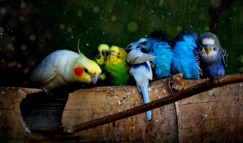 Попугаи обои на рабочий стол006