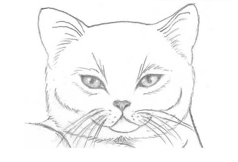 Простые рисунки для срисовки карандашом003