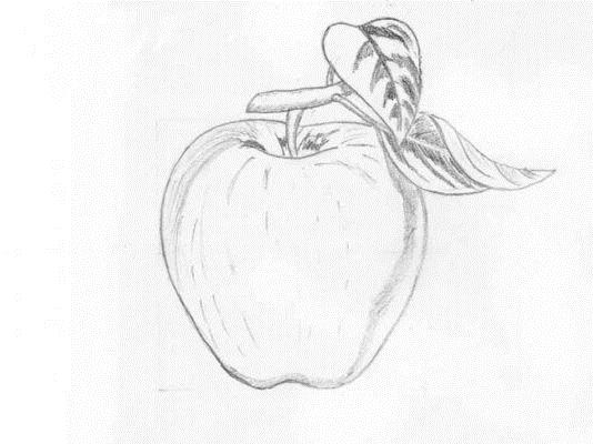 Простые рисунки для срисовки карандашом009