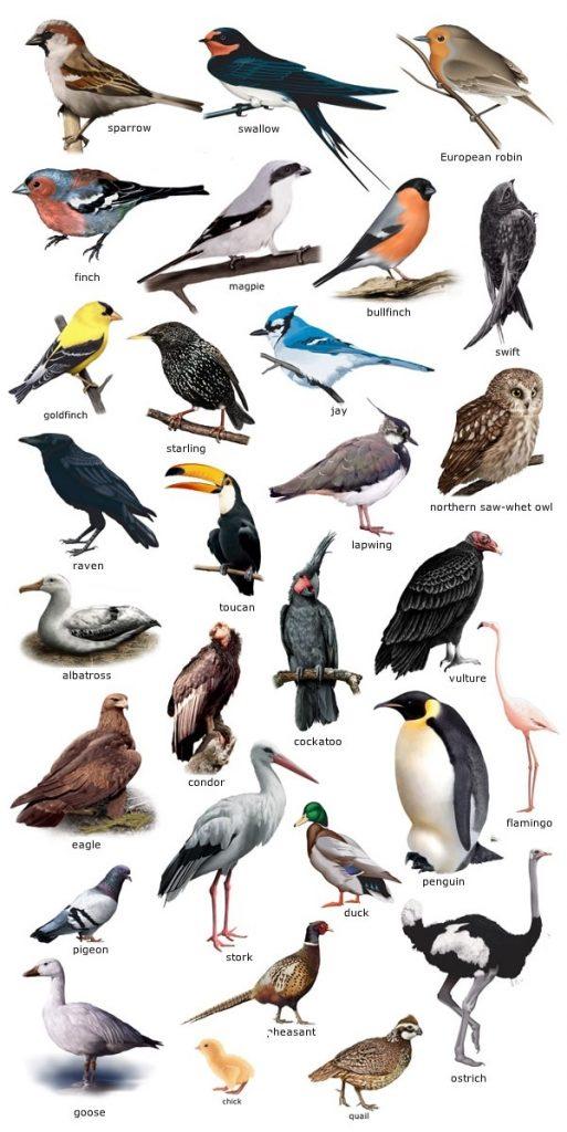 мебель торговой птицы россии в картинках с названием автовладелец хочет