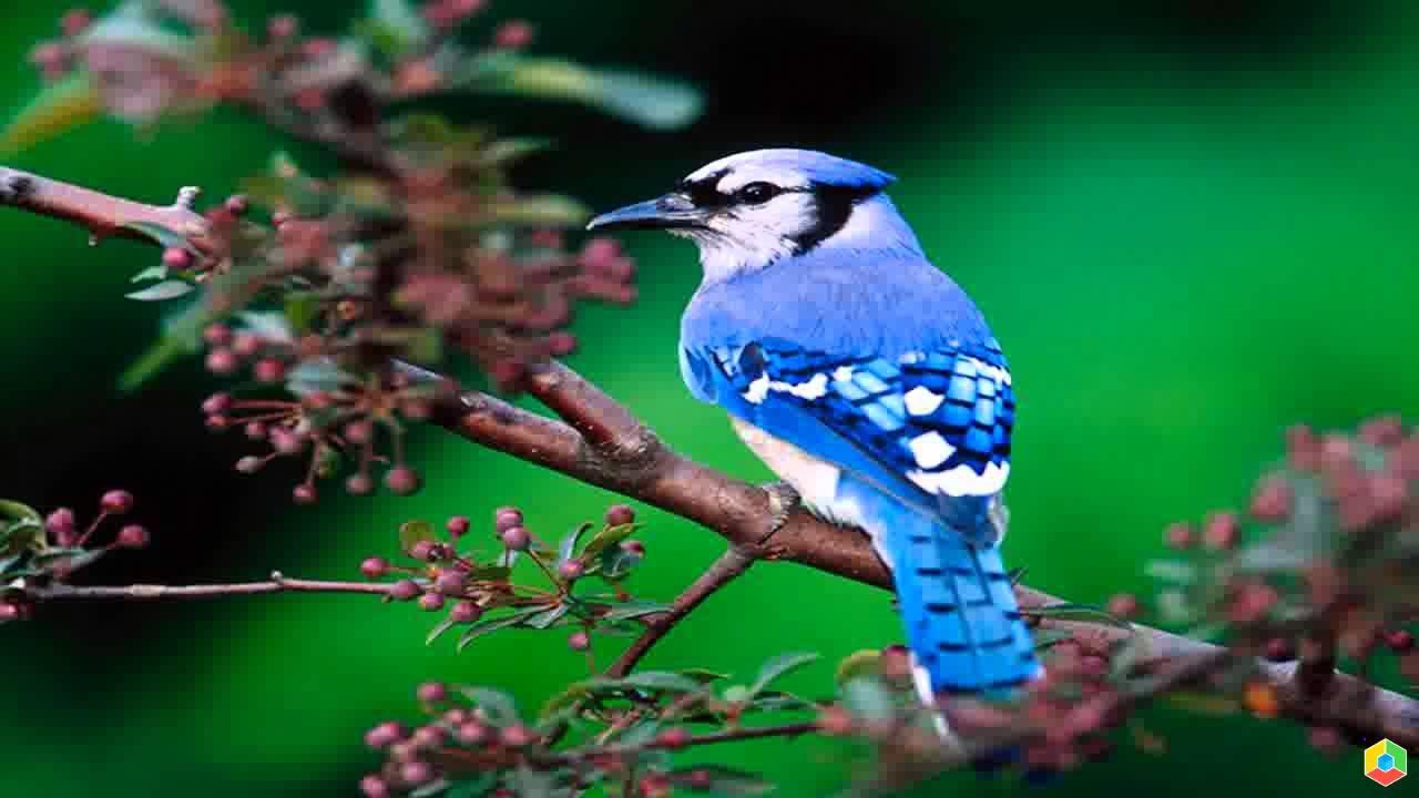Птицы картинки красивые на телефон, днем