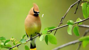 Птицы красивые картинки на рабочий стол019