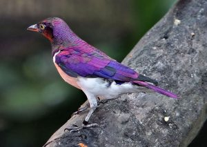 Птицы красивые картинки024
