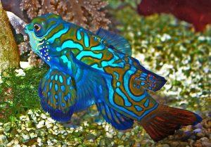 Рыбы красивые картинки021