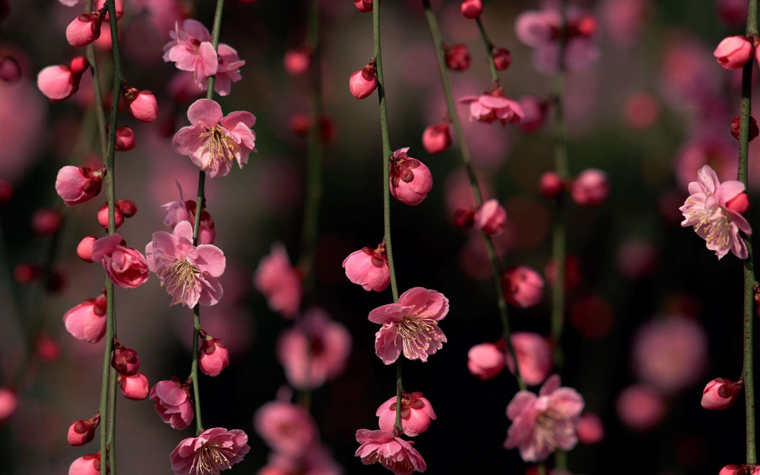 День матери, картинки цветы сакуры красивые
