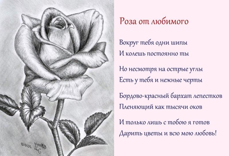 самка красивые стихи с рисунками аплоадеры последние