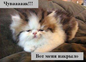 Смешные картинки про котов с надписью026