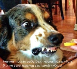 Смешные картинки про собак с надписью027