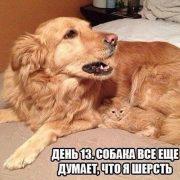 Смешные картинки с собакой   красивая подборка021