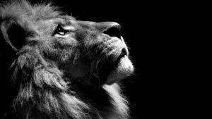 Фото льва в хорошем качестве морда   коллекция024